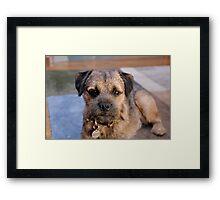 Furry Border Terrier Framed Print
