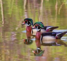 Wood Ducks B.F.F. - Ottawa, Canada by Jim Cumming