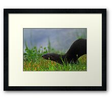 A Stealthy One Framed Print