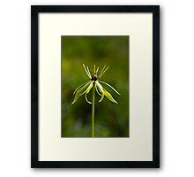 Herb Paris (Paris quadrifolia) Framed Print