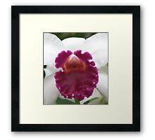 White and a Little More Framed Print