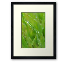 Close attention to life on the edge Framed Print