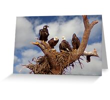 BALD EAGLES FAMILY PORTRAIT Greeting Card