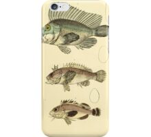 The Animal Kingdom by Georges Cuvier, PA Latreille, and Henry McMurtrie 1834  103 - Pisces Fish iPhone Case/Skin
