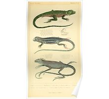 The Animal Kingdom by Georges Cuvier, PA Latreille, and Henry McMurtrie 1834  018 - Reptilia Reptiles Poster