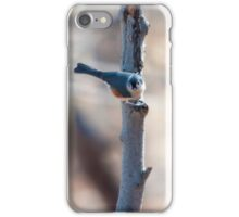 Bluejay On Branch iPhone Case/Skin
