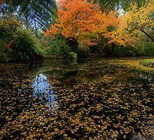 Autumn by Michael Eyssens