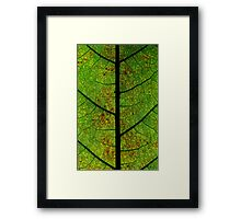 Green highway's road leaves Framed Print