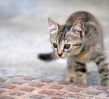 Little Hunter by Freelancer