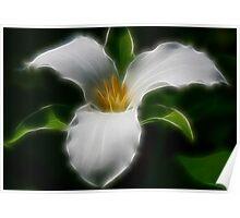 Pure White Trillium Poster