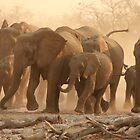 Elephant race by ChrisCoombes
