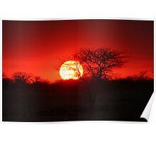 Etosha sunset Poster