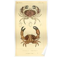 The Animal Kingdom by Georges Cuvier, PA Latreille, and Henry McMurtrie 1834  304 - Crustacea Crustaeans Poster