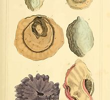 The Animal Kingdom by Georges Cuvier, PA Latreille, and Henry McMurtrie 1834  223 - Mollusca Mollusks by wetdryvac