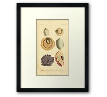 The Animal Kingdom by Georges Cuvier, PA Latreille, and Henry McMurtrie 1834  223 - Mollusca Mollusks Framed Print