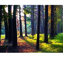 """""""Cathedral In The Woods"""" Photographic Print"""