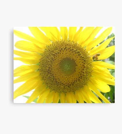 Go Check It Out Canvas Print