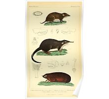 The Animal Kingdom by Georges Cuvier, PA Latreille, and Henry McMurtrie 1834 582 - Mammalia Mammals Poster