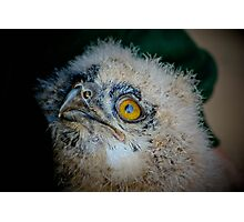 Baby Owl 2 ( one of four ) Photographic Print