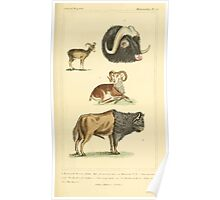 The Animal Kingdom by Georges Cuvier, PA Latreille, and Henry McMurtrie 1834 635 - Mammalia Mammals Poster