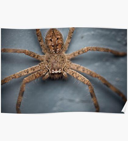 Creepy Crawler Poster
