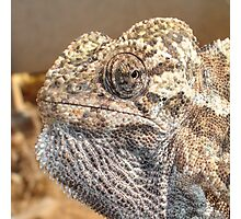 Chameleon With Sinister Facial Expression Photographic Print