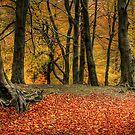 Autumn by bobubble