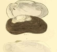 The Animal Kingdom by Georges Cuvier, PA Latreille, and Henry McMurtrie 1834  274 - Mollusca Mollusks Sticker