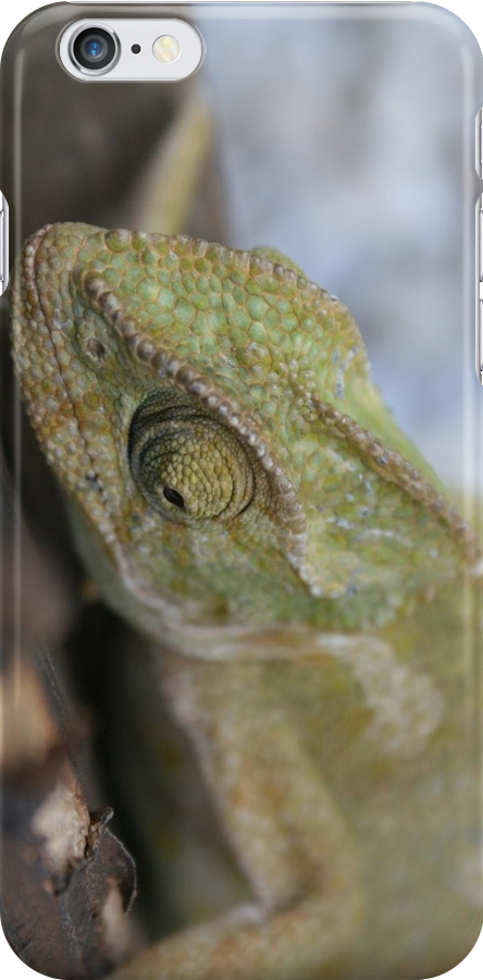 Chameleon In Green Shades by taiche