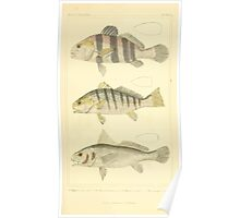 The Animal Kingdom by Georges Cuvier, PA Latreille, and Henry McMurtrie 1834  098 - Pisces Fish Poster