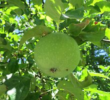 Green Apple by cathiejoyyoung