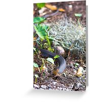Banded Water Snake Greeting Card