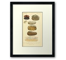 The Animal Kingdom by Georges Cuvier, PA Latreille, and Henry McMurtrie 1834  279 - Mollusca Mollusks Framed Print