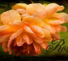 Rose by Jonicool