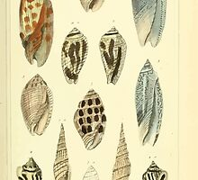 The Animal Kingdom by Georges Cuvier, PA Latreille, and Henry McMurtrie 1834  239 - Mollusca Mollusks by wetdryvac