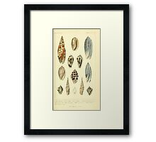 The Animal Kingdom by Georges Cuvier, PA Latreille, and Henry McMurtrie 1834  239 - Mollusca Mollusks Framed Print