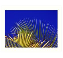 Palm and Sky Art Print