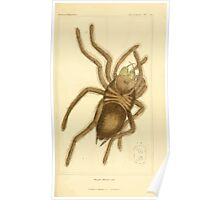 The Animal Kingdom by Georges Cuvier, PA Latreille, and Henry McMurtrie 1834  361 - Arachnides Arachnids Poster