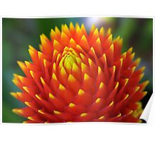 Red Sun Flower, Puerto Rico Poster