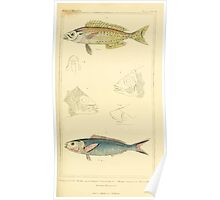 The Animal Kingdom by Georges Cuvier, PA Latreille, and Henry McMurtrie 1834  116 - Pisces Fish Poster