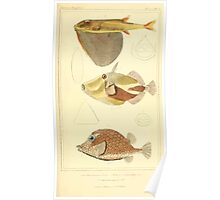The Animal Kingdom by Georges Cuvier, PA Latreille, and Henry McMurtrie 1834  189 - Pisces Fish Poster