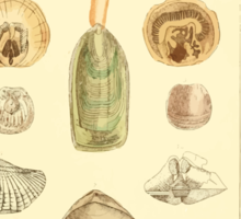 The Animal Kingdom by Georges Cuvier, PA Latreille, and Henry McMurtrie 1834  287 - Mollusca Mollusks Sticker