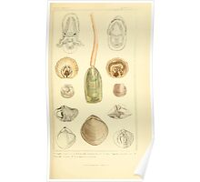The Animal Kingdom by Georges Cuvier, PA Latreille, and Henry McMurtrie 1834  287 - Mollusca Mollusks Poster