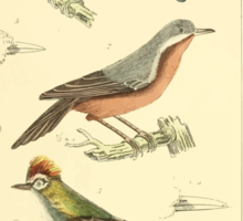 The Animal Kingdom by Georges Cuvier, PA Latreille, and Henry McMurtrie 1834 669 - Aves Avians Birds Sticker