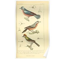 The Animal Kingdom by Georges Cuvier, PA Latreille, and Henry McMurtrie 1834 669 - Aves Avians Birds Poster