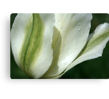Spring Green Tulip Canvas Print