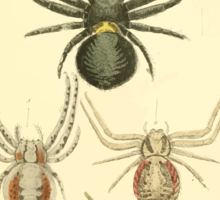 The Animal Kingdom by Georges Cuvier, PA Latreille, and Henry McMurtrie 1834  376 - Arachnides Arachnids Sticker