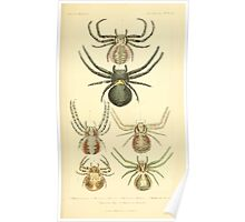 The Animal Kingdom by Georges Cuvier, PA Latreille, and Henry McMurtrie 1834  376 - Arachnides Arachnids Poster