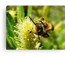 Are You Looking at Bee? Canvas Print