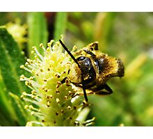 Are You Looking at Bee? Photographic Print